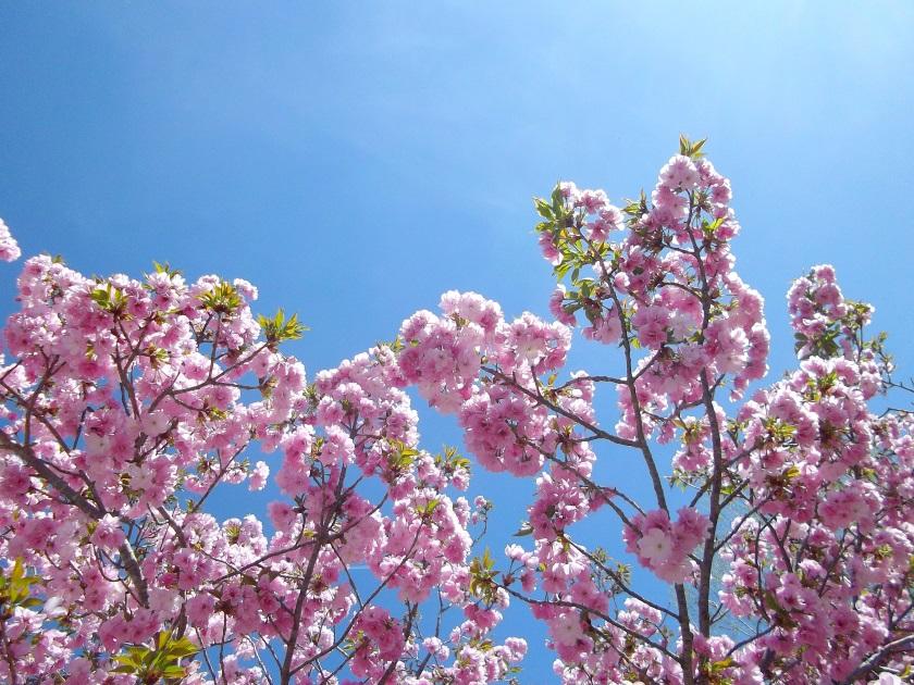 amélie les bains cerisiers